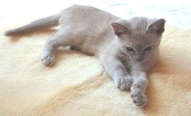 SHEEPSKIN RUG FOR YOUR CAT